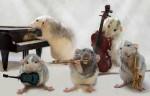 Крысиный оркестр Эллен ван Дилен