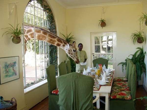 Giraffe Manor кения