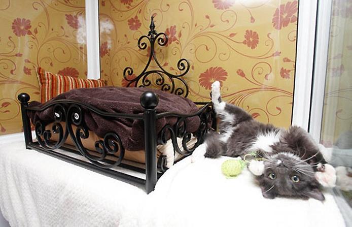 кошачий отель фото