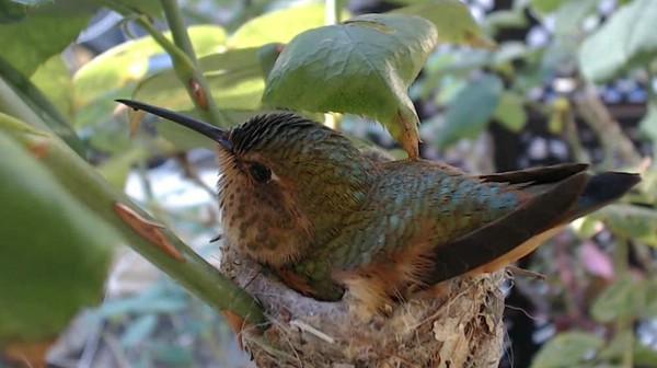 колибри фото