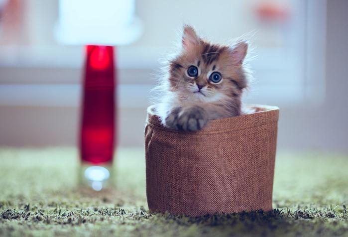смешной котенок фото