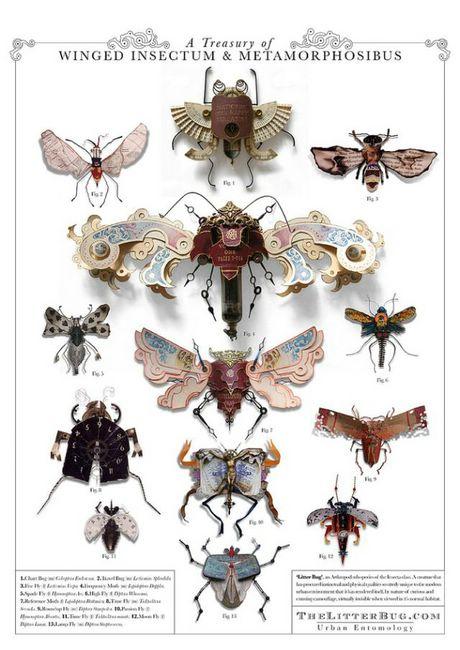 насекомые фото