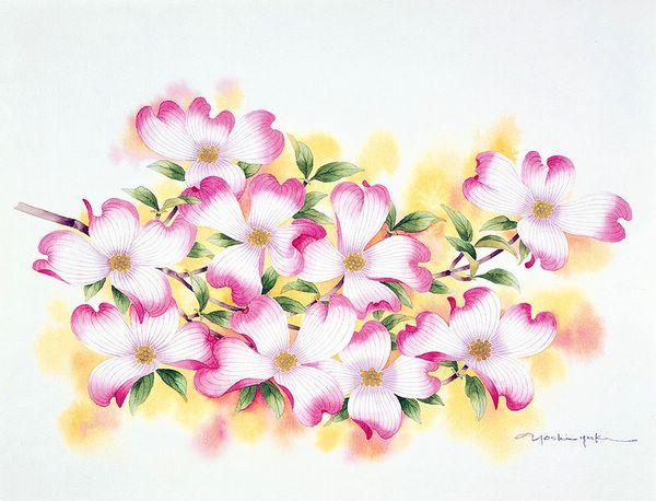 цветы акварелью Ibaragi Yoshiyuki