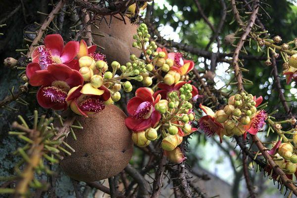 экзотические растения