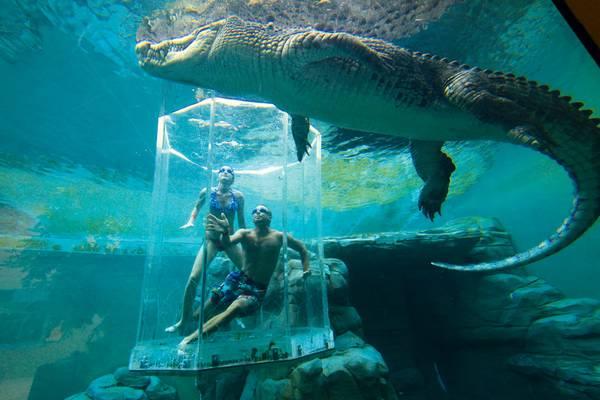 аттракцион Бухта Крокозавров австралия
