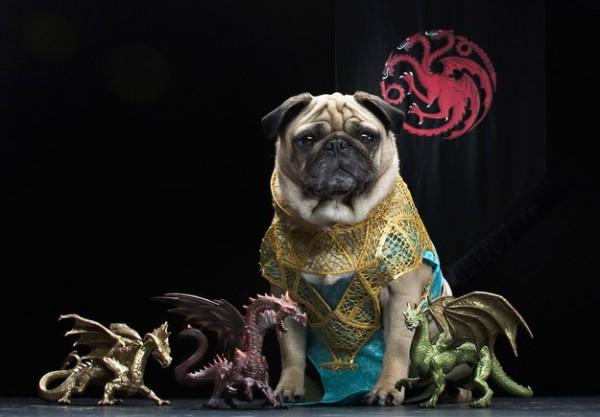 мопсы в костюмах игры престолов фото