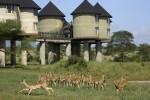 Необычный отель в сердце африканского заповедника