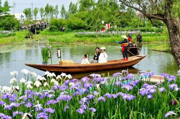 сад ирисов в Японии