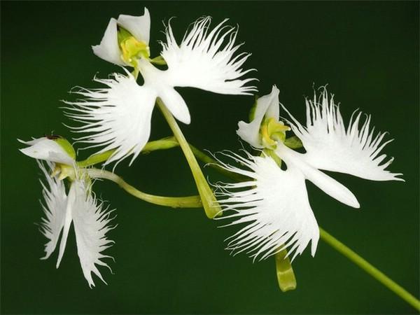 самые красивые орхидеи в мире