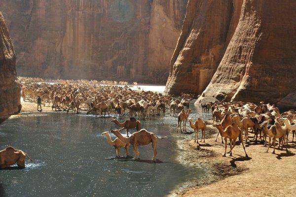 оазис в пустыне сахара фото