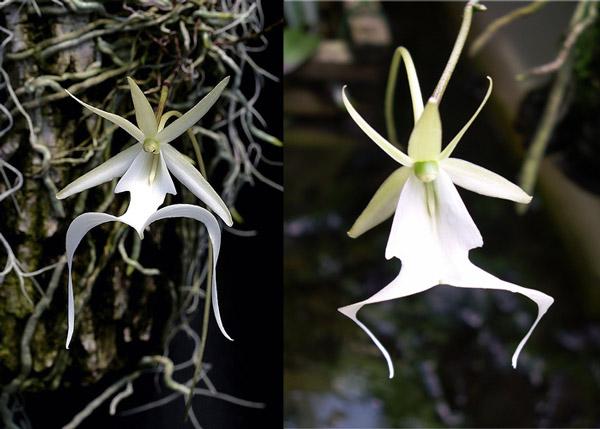 самые редкие виды орхидей в мире