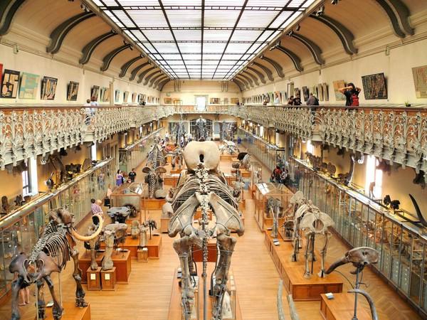 Парижская Галерея сравнительной анатомии и палеонтологии