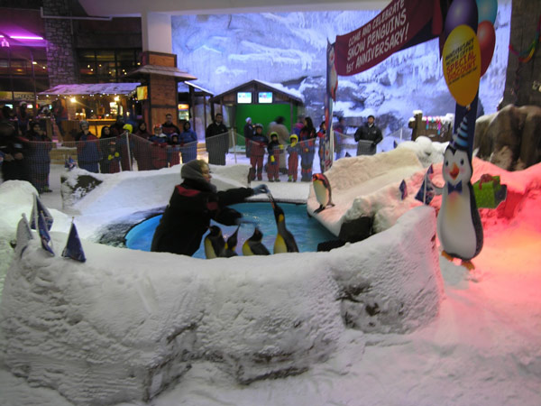 отдых в дубае лыжный курорт Ski Dubai