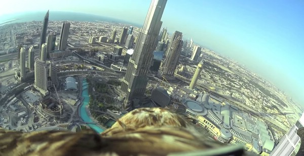 с высоты птичьего полета