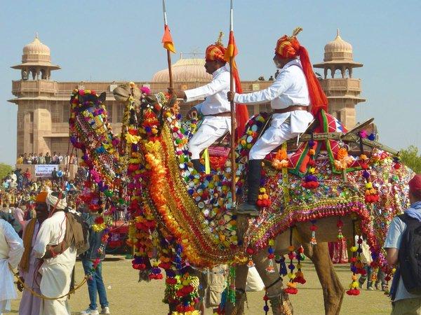 фестиваль верблюдов индия