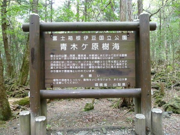 лес Дзюкай япония