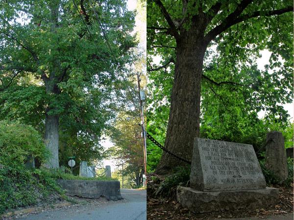 дерево владеет само собой
