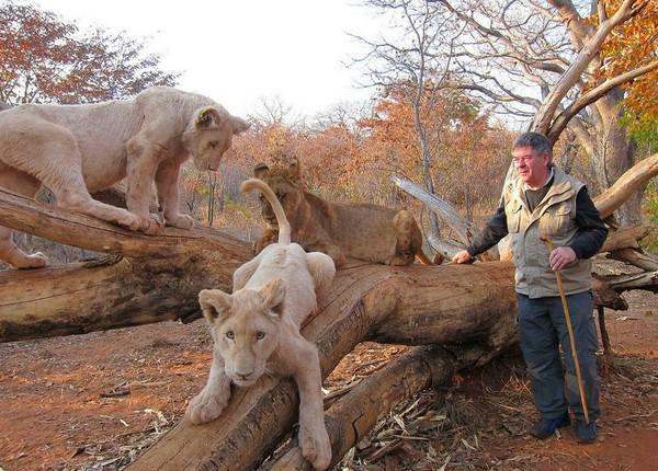 африканский отель с белыми львами