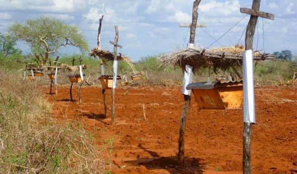 защита от слонов в африке