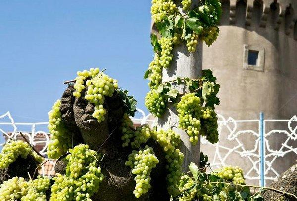 праздник винограда италия