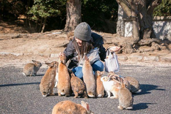 остров кроликов в японии