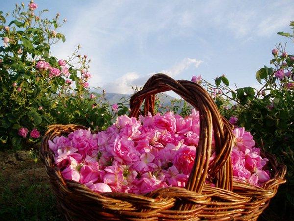 долина роз казанлык