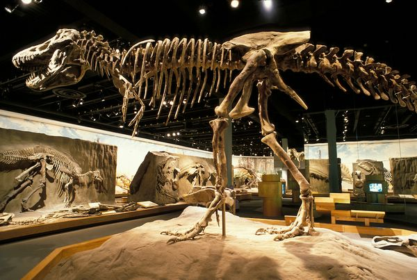 музей динозавров в канаде