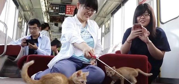 поезд с кошками япония