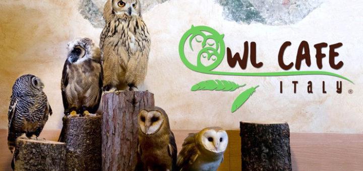 Owl Cafè совиное кафе в италии